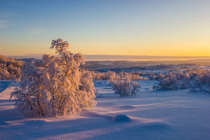 мороз, солнце, деревья, иней, снег, зима, пейзаж, тропа В тёплых лучах солнцаphoto preview