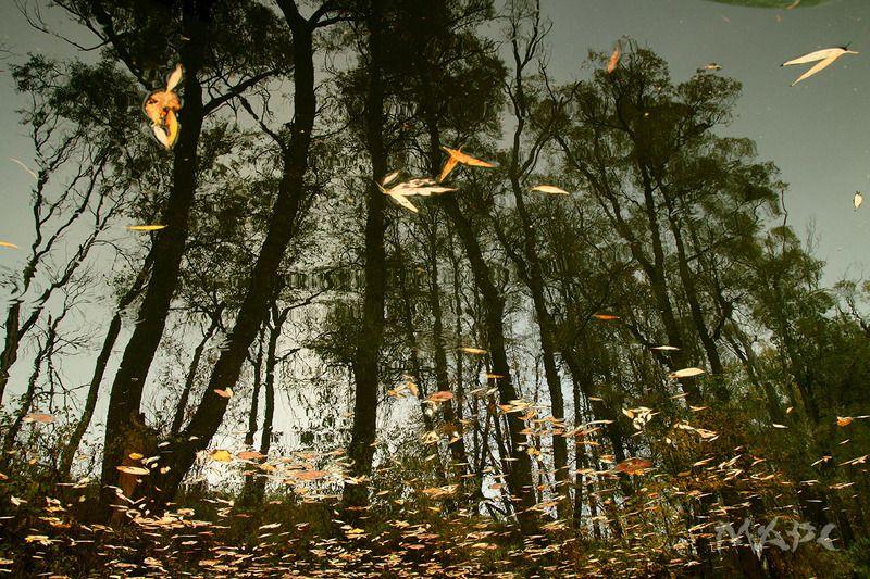 пейзаж осень река отражение Осень в реке 2photo preview