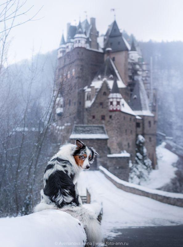 собака, природа у замкаphoto preview