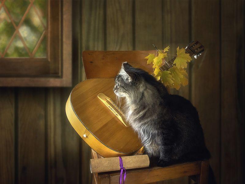 домашние животные, кошки, кот Мейсон, котонатюрморт Вспоминая доброго друга....photo preview