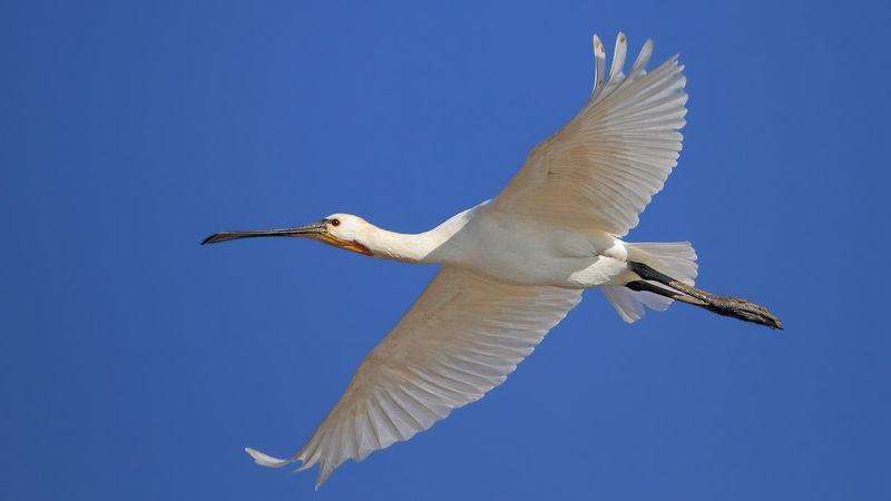 animals,birds, bif, birds in flight, 7d, 400mm, животные, птицы, в полёте Птицы в полёте..photo preview
