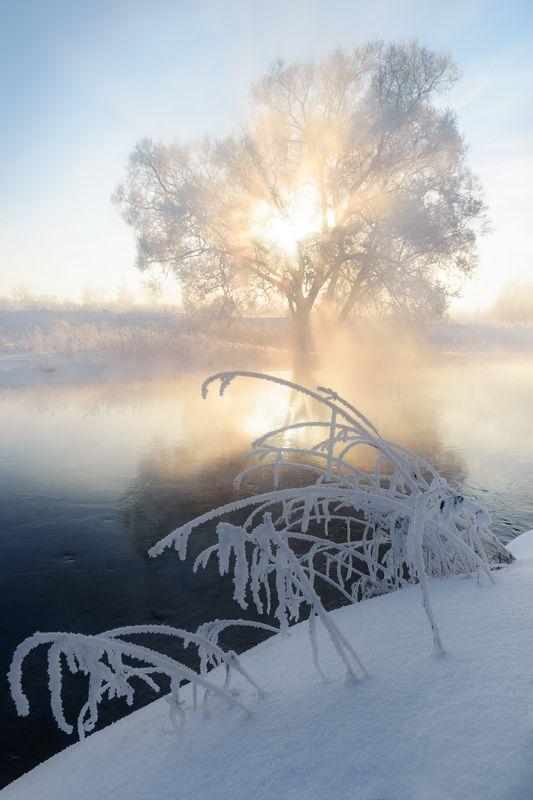Сквозь туман и ветки солнце пробивалось.photo preview