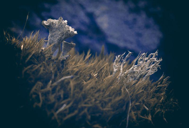 Природа, растения, лес, мох, лишайники, кладония Кладонииphoto preview