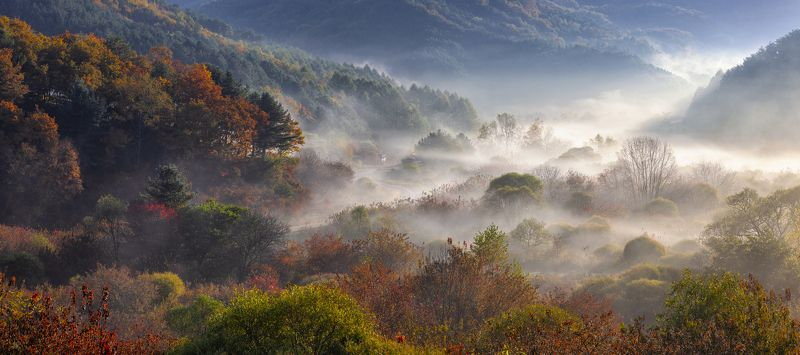 foliage, misty, MOUNTAINS, fog, AUTUMN, dream Misty morning in the forestphoto preview