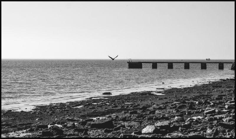 Словения, черно-белая, море, весна Птица на горизонтеphoto preview