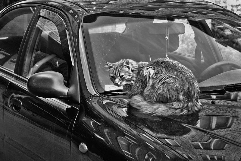 кошка, машина, мурманск, апатиты Пригретое местоphoto preview