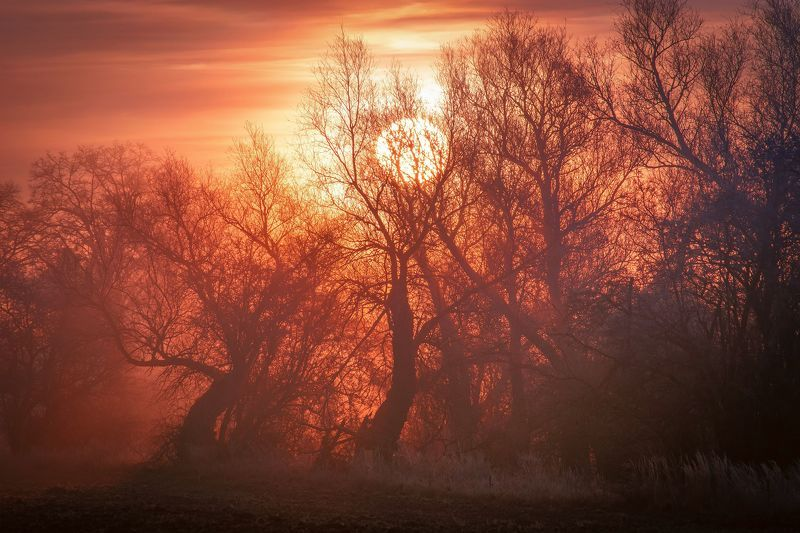 daybreak, sunrise, winter, sky, fog, sun, nature, nikon, clouds, trees, mixt, light,  In the Trapphoto preview