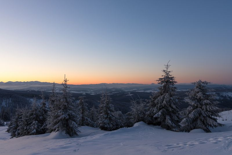 winter,morning,landscape,forest,mountains,snow Morning calmphoto preview