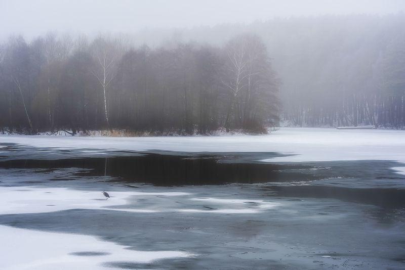 беларусь, свислочь, зима, цапля Одинокий рыболовphoto preview