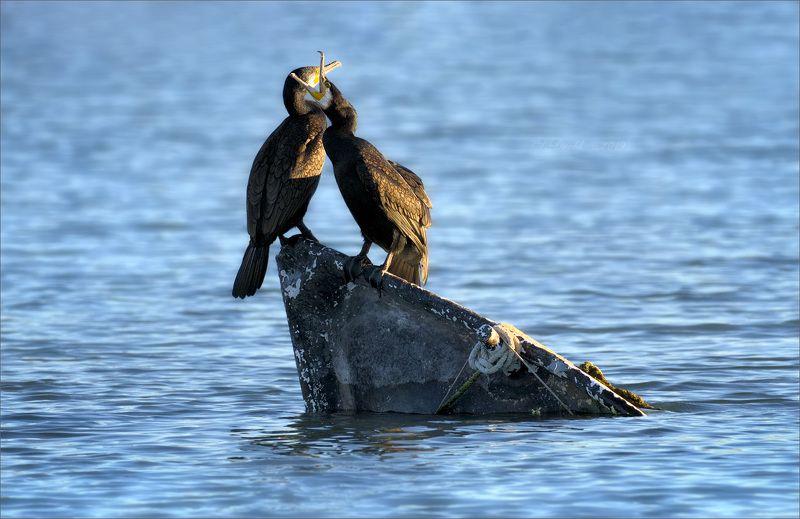 баклан, лодка, вода, закат, фауна Я прошепчу тебе на ушкоphoto preview
