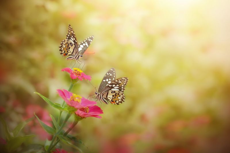 macro, beauty, insect, background, beauty, beautiful, background, backyard, nature, art, wild, flowers, papilio demoleusphoto preview