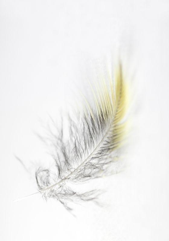 Макро, перо, птицы, невесомость Невесомостьphoto preview