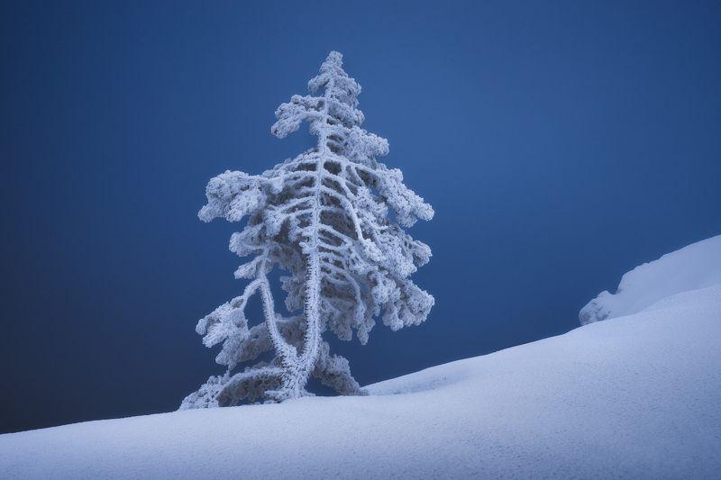 крым, зима, зима в крыму, зимний крым, весна в крыму, весенний крым, ай-петри, зима в горах, туризм, путешествия, фототур, фототур в крым, тур по крыму Зачарованная зимойphoto preview