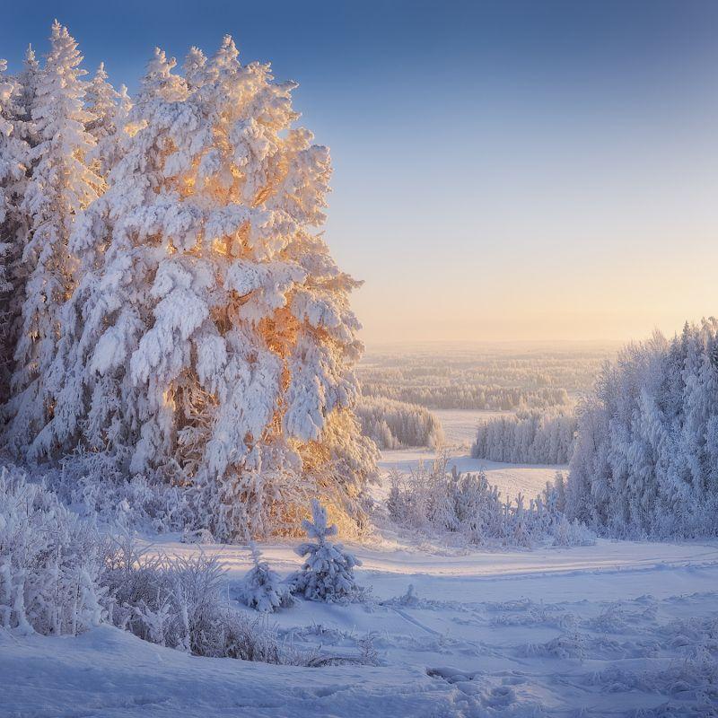лес, зима, иней В царстве холодаphoto preview