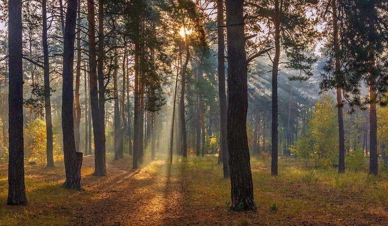 landscape, пейзаж, утро, лес,  деревья, солнечный свет,  солнце, природа, солнечные лучи,  прогулка, осень, осенние краски прогулка в осеннем лесуphoto preview