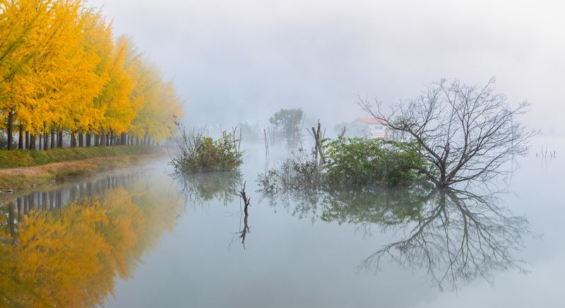 willow tree, reflection, poetic, misty,fog,autumn Autumn on the waterphoto preview