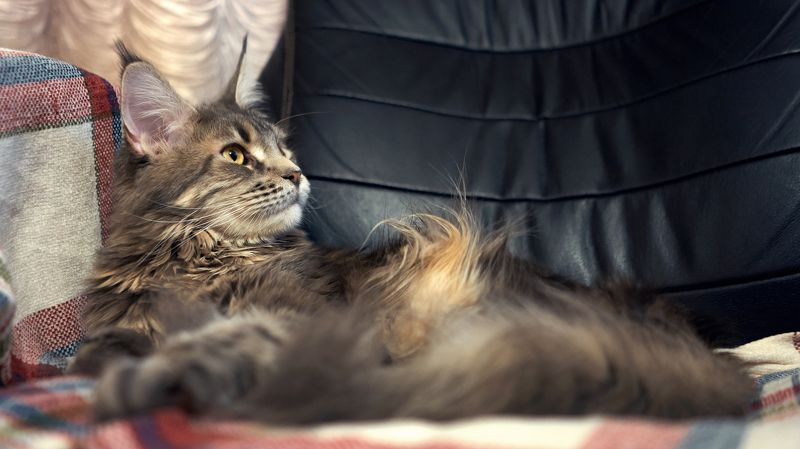 кошки, sony, 28f2 Стилистphoto preview