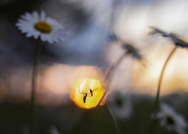 природа, пейзаж, закат, охота В огнеphoto preview