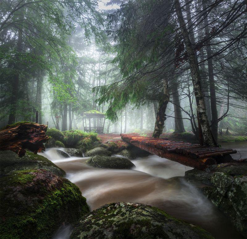 landscape nature scenery forest wood autumn mist misty fog foggy river bridge longexposure mountain vitosha bulgaria туман лес oсень Rainy July фото превью