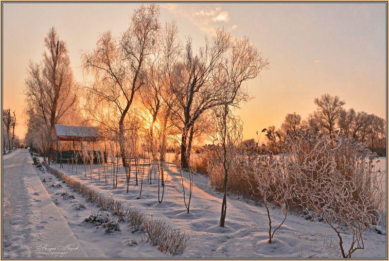 зима, февраль, утро, рассвет, снег, иней В последнее утро зимыphoto preview