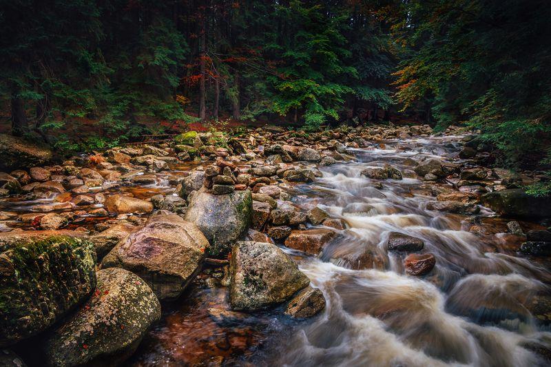 природа лес деревья осень листва  путешествия пейзаж тени  чехия вода река водоём Река Мумлаваphoto preview