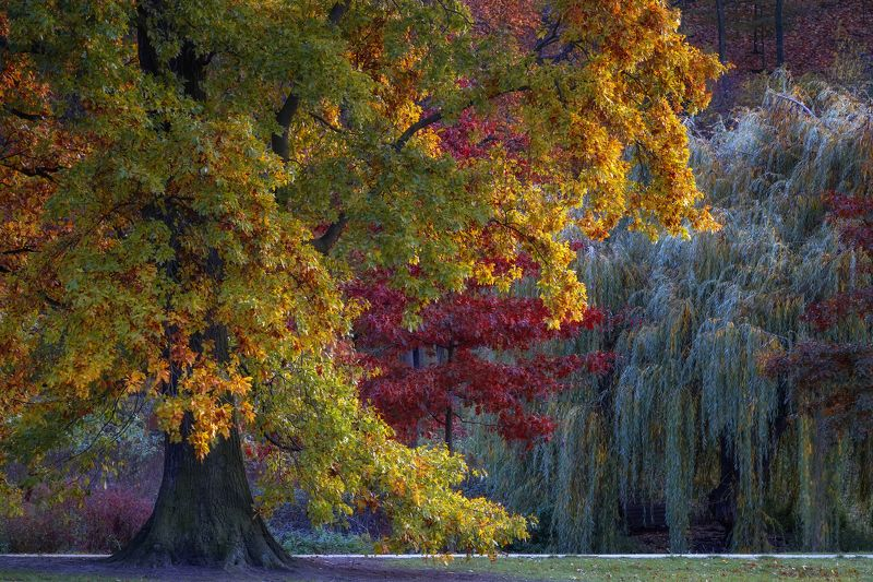 природа лес деревья осень листва утро туман путешествия пейзаж  чехия парк Краски осениphoto preview