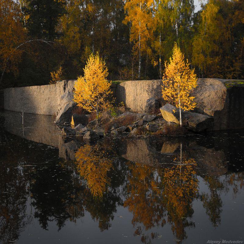 корнин, осень, березы, фастовский, район, карьер, украина, лес, озеро, скалы,  Жизнь пробиваетсяphoto preview