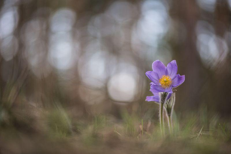 сон трава, свет, цвет, весна, апрель, маклок, воронеж, геннадий мещеряков С тобой не страшно...photo preview