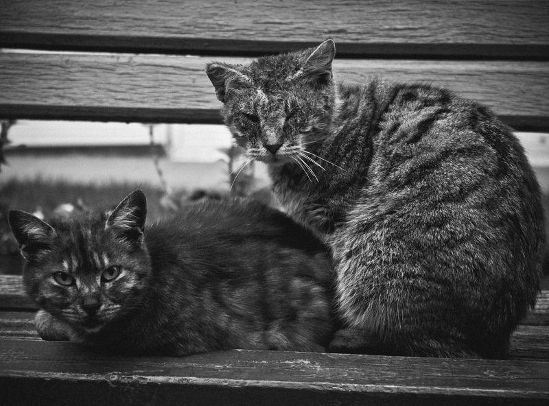 котэ, коты, кошки, кот, кошка, животное owners of the streetphoto preview