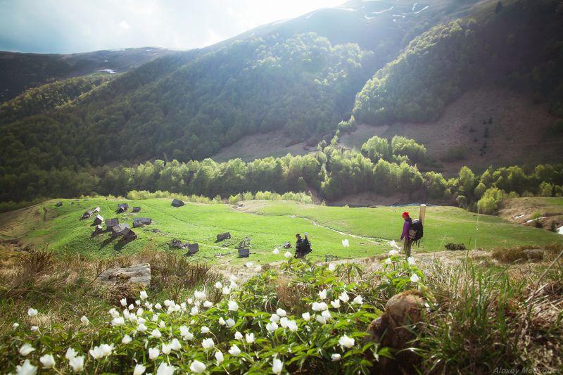карпаты, свидовец, весна, май, зеленый, полонина, туристы, ярошевская, ярошевська, колыбы Полонина Ярошевськаphoto preview