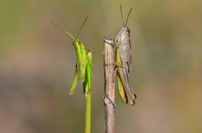 природа , кузнечик , двое , человечки Друзьяphoto preview