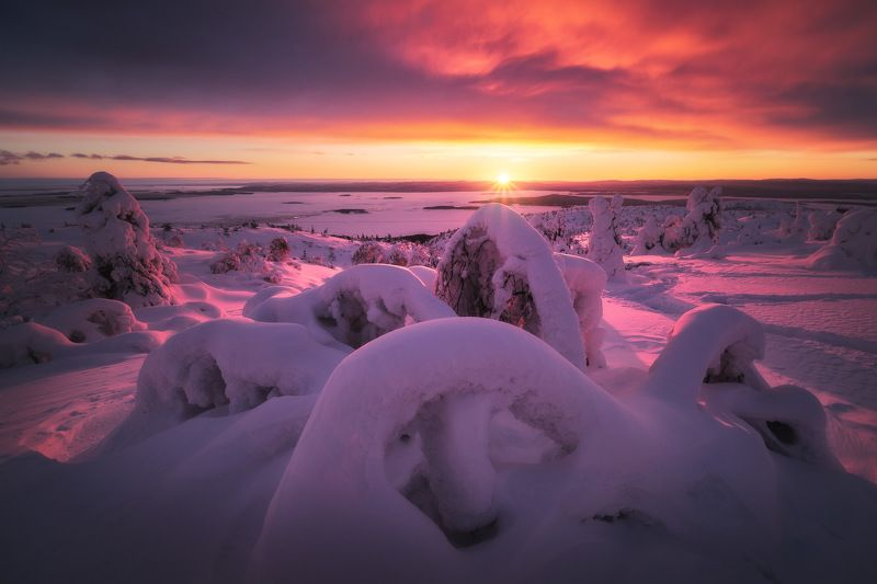 россия, кольский полуостров, мурманская область, кандалакша, природа, пейзаж, зима, горы, сопка, снег, закат, лесотундра, белое море Снежный осьминогphoto preview