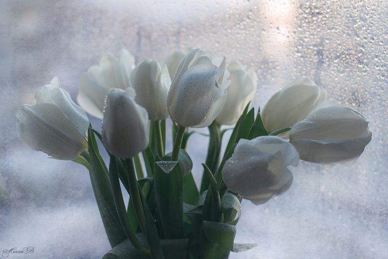 белые тюльпаны, капли, весна Долгожданная веснаphoto preview