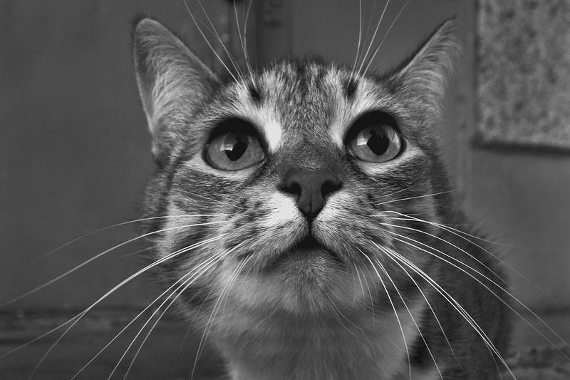 кот, глаза, взгляд, апатиты А ты кто такой ?photo preview