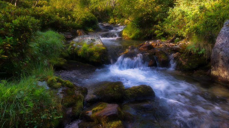 поток, фрагмент За водойphoto preview