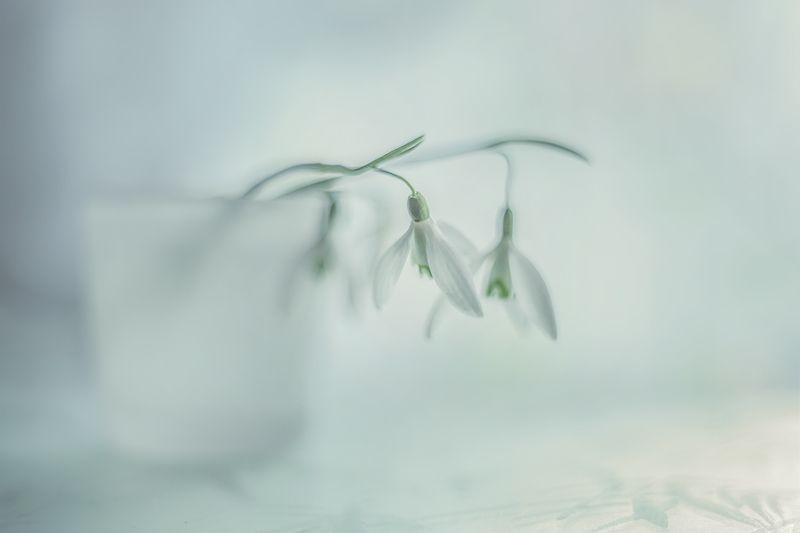 przyroda,natura,makro,martwa natura,kwiaty,flowers,snowdrop ...photo preview