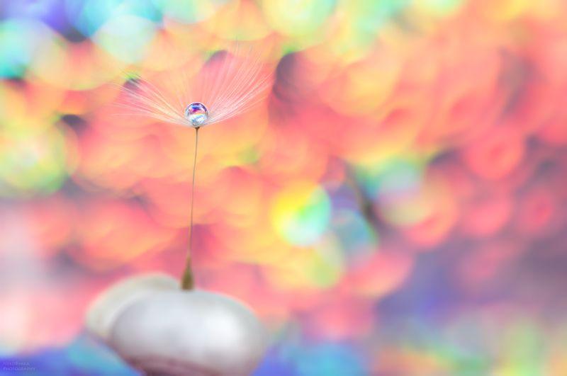 макро,боке, радуга, капли, пушинка, macro, bokeh, rainbow, drops, fuzz ***photo preview