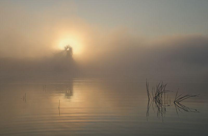 утро, природа, рассвет, архангельское Рассветная феерияphoto preview