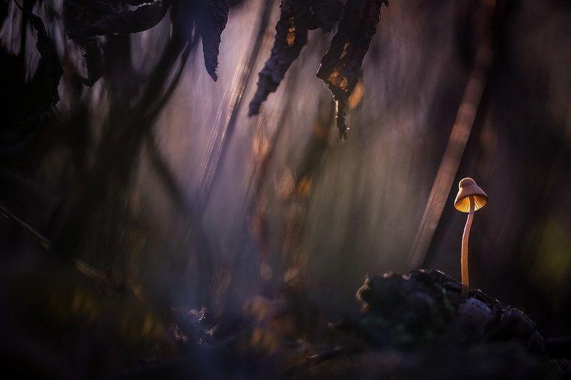 В заповедных и дремучих страшных Муромских лесах... фото превью