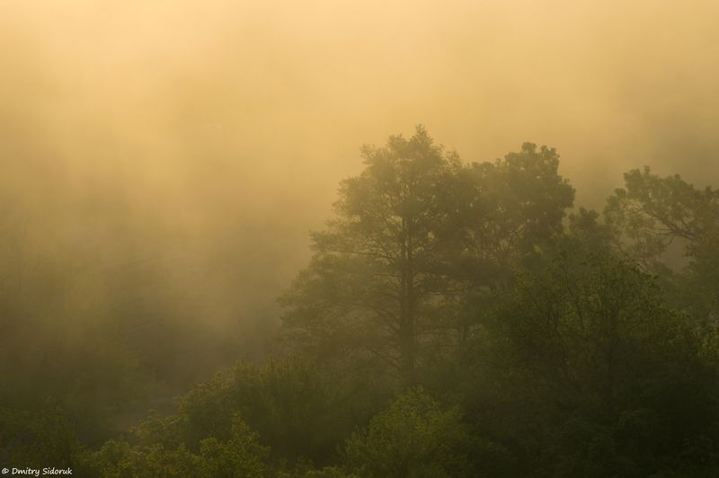 Золотой туман рассветаphoto preview