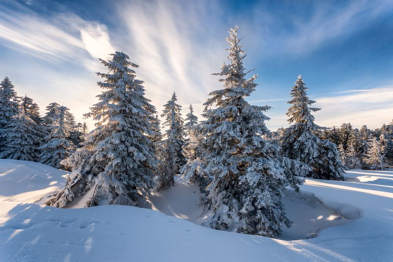 Winter forestphoto preview