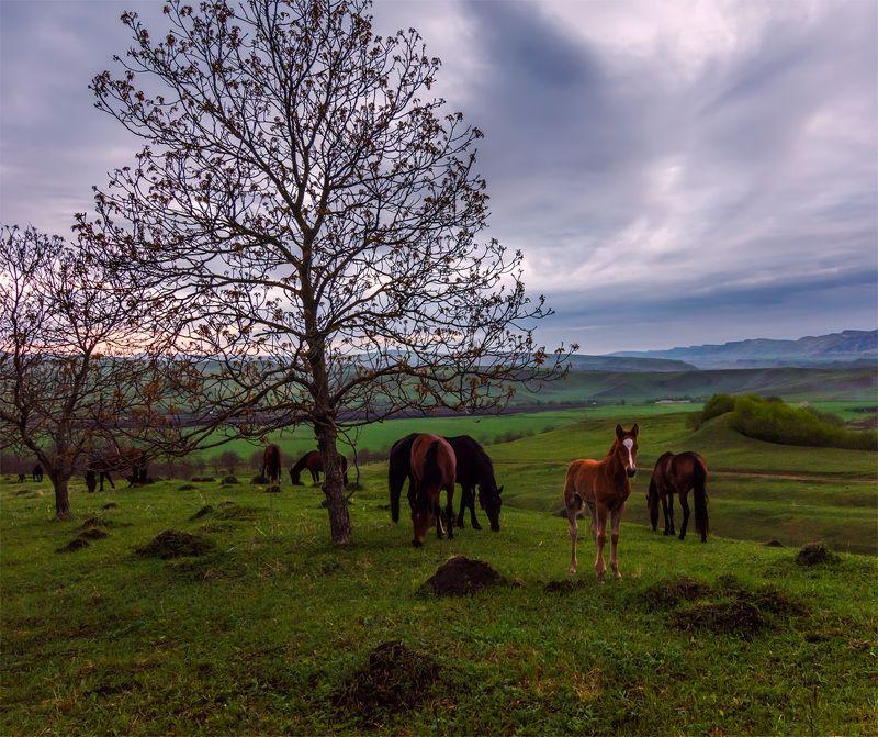природа, пейзаж, горы, кавказ, природа россии, дикая природа, закат, свет, облака, вечер, весна, животные, лошади *photo preview