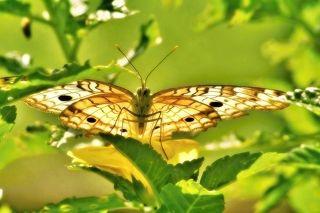 Hiding Butterfly