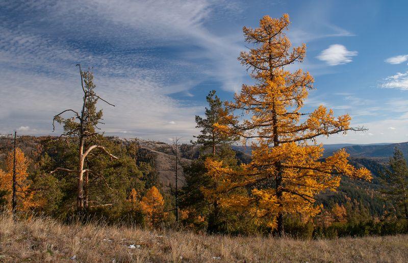 Пейзаж, природа, горы, небо, облака, лиственница, сосна, Южный Урал, осень Осень в горахphoto preview