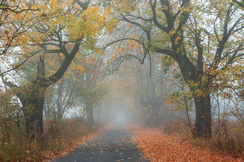 The memory of autumn фото превью