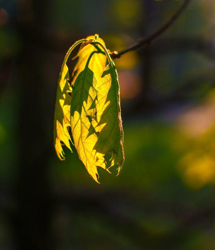 nature, природа, весна, ветка, листья, солнечный свет, первые листикиphoto preview