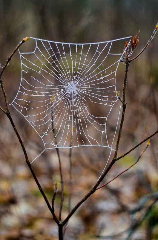 паутина, зима, иней Колючая паутинаphoto preview