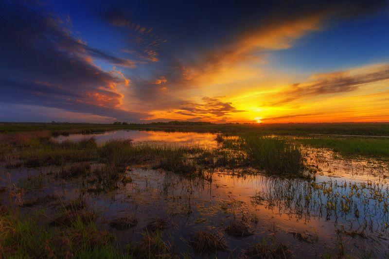 Вечер на болотах photo preview