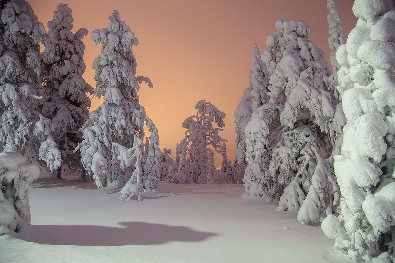 зима, снег, ночь, лес, финляндия Безмолвиеphoto preview