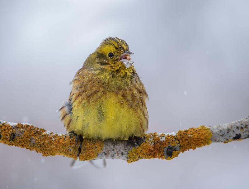птицы,природа,весна \